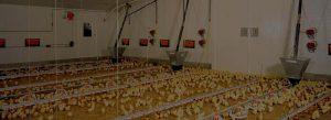 equipos de ventilacion para granjas avicolas
